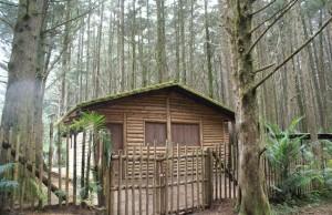 dom na działce leśnej