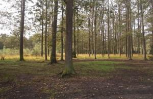 nieruchomości leśne